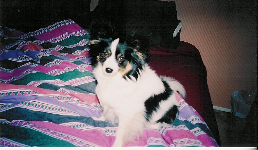 June 2003 - Maxxie poses for another picture