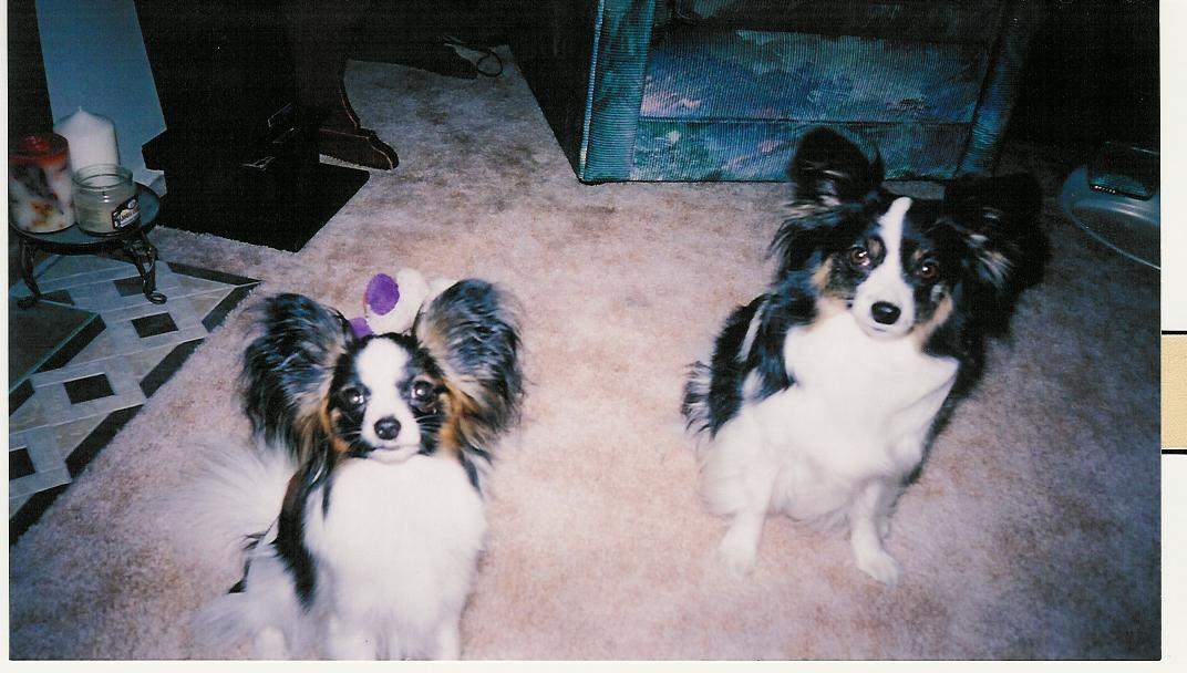 June 2003 - Maxxie and Sophie posing for a group picture